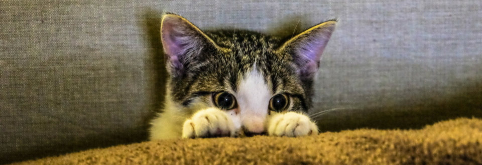 Kitten peering over a cushion