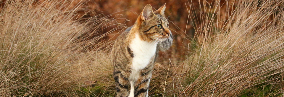 Cat in brown long grass