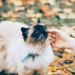 Cat Eating Dry Food
