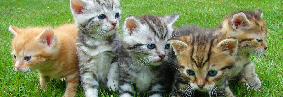 Kittens Playing In A Field