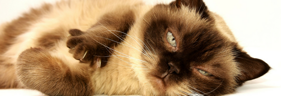 grumpy brown cat