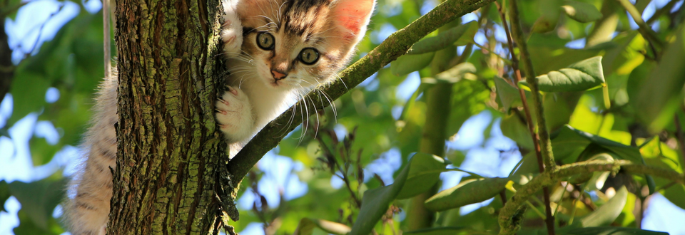 White and brown kitten in a tree