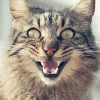 Very Excited Cat