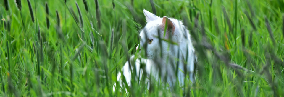 Cat in long grass